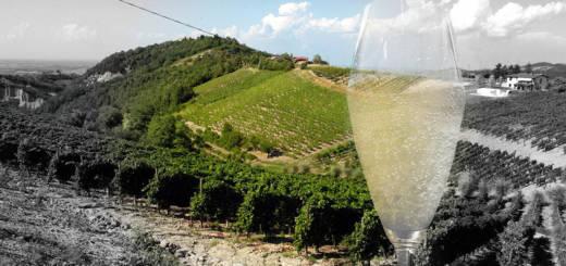 vigne e vino